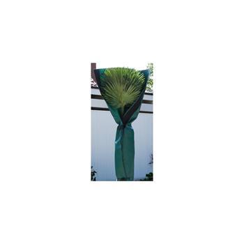 BioGreen Palmen Stammschutz
